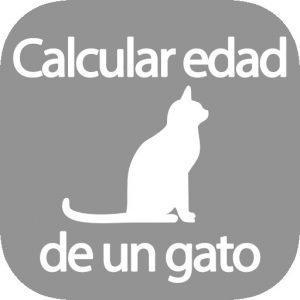 Calcular edad de un gato